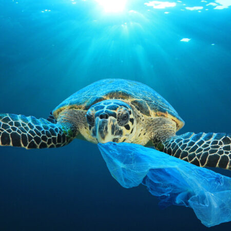 Environmental awareness – THINK BLUE – Save Seas and Waters for Future